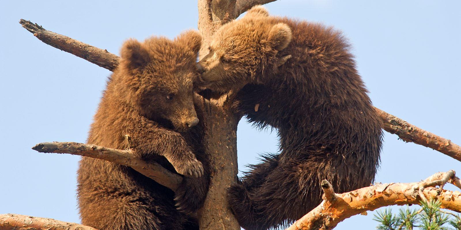 Bjørneparken